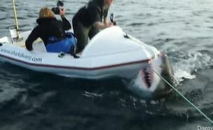 כריש מתנפל (צילום: יוטיוב)