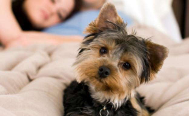גבר, אישה וכלב במיטה (צילום: sswartz, Istock)