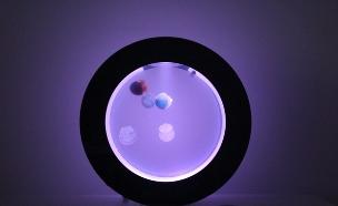 אקווריום מדוזות (צילום: orbit)