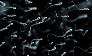 תאי זרע (אילוסטרציה: Corbis)