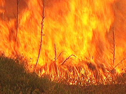 כותרות העבר: גל שריפות בכל הארץ (צילום: חדשות 2)