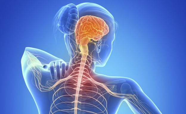 צילום עצבי של עמוד השדרה (צילום: אימג'בנק / Thinkstock)