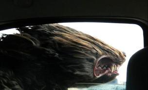 כלבים ברוח (צילום: boredpanda.com)