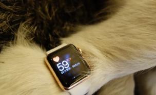 כלב עם אפל ווטש (צילום: weibo.com)