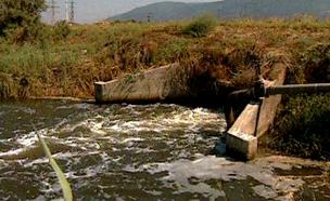 המים כבר לא צלולים בנחלים (צילום: חדשות 2)