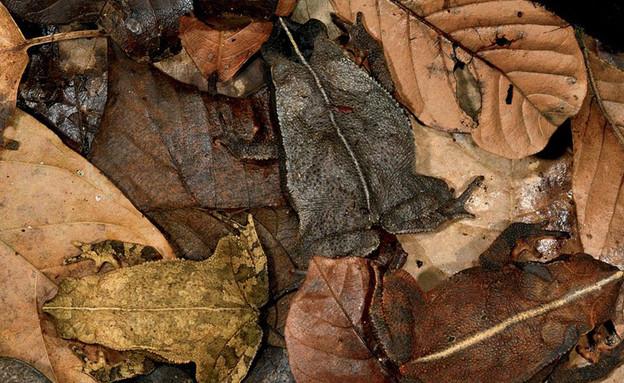 צפרדעים מגניבות (צילום:  boredpanda.com)