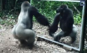 חיות משתקפות (צילום: יוטיוב)