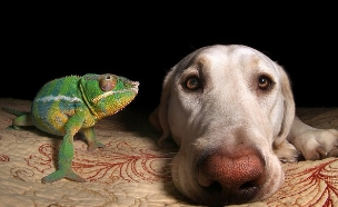 כלב וזיקית (צילום: Caters News Agency)