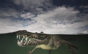 מתחת למים (צילום: מאטי סמית)