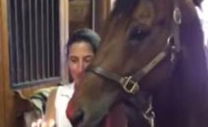 סוס יומולדת (צילום: יוטיוב)