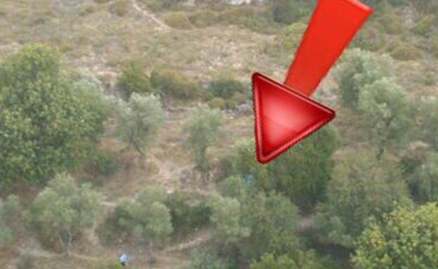 תקריב העץ עליו הסתתר החשוד (צילום: חטיבת דוברת המשטרה)