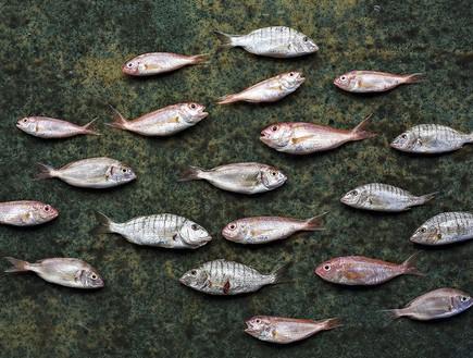 משיה דגים