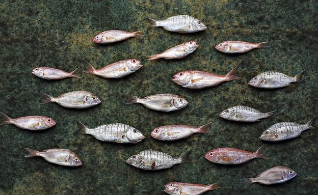 משיה דגים (צילום: דן פרץ,  יחסי ציבור )