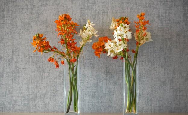 אלה סהר, פרחים  (צילום: ליאור אביטן)