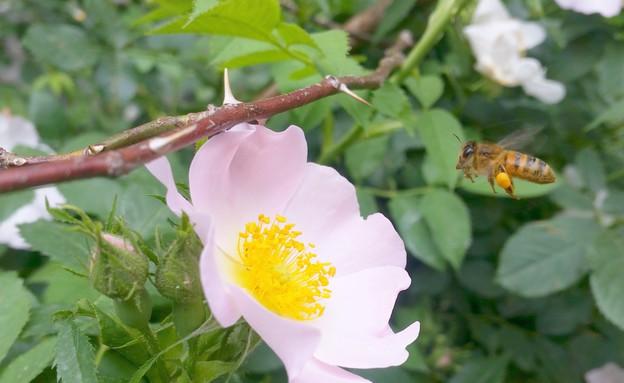 ורד בר (צילום: יובל-ג'וב הרגיל)