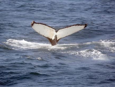 שיט צפייה בלוויתנים