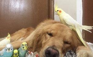 כלב וחברים (צילום: Imgur)