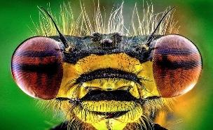 חרקים מפחידים מקרוב (צילום: Caters News Agency)