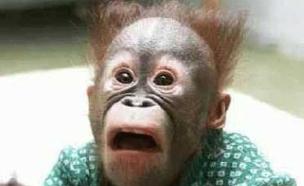 קוף מופתע (צילום: יוטיוב )