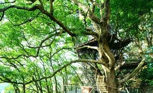 בית עץ יפן (צילום: global.hoshinoresort)