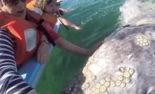 מלטפים לוויתן
