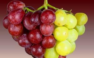 זן ענבים יובלי (צילום: מכון וולקני,  יחסי ציבור )