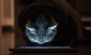 חתול טאבלט (צילום: Houser Wolf (cc-sa), flickr)