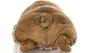 תחת של כלב (צילום: WilleeCole, GettyImages IL)