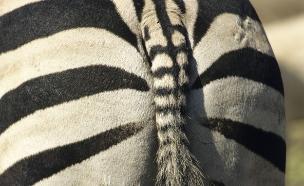 מין אנאלי (צילום: Purestock, GettyImages IL)