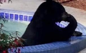 דב בבריכה (צילום: חדשות 2)