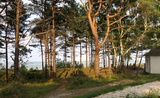 אתר הנופש בפרורה - העצים בין הים למתחם (צילום: לירון מילשטיין)