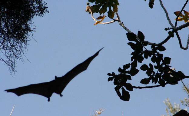עטלפים בבית גוברין (צילום: אסף צוער)