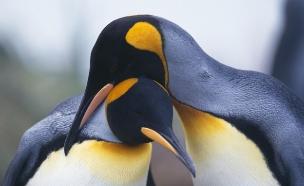 חיות זוגיות (צילום: Fuse, GettyImages IL)