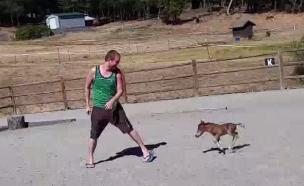 סוס גמדי (צילום: יוטיוב)