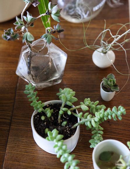 הביתה של אליס, ג, צמחים (14) (צילום: הגר דופלט)
