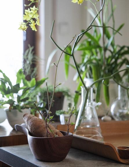 הביתה של אליס, ג, צמחים (28) (צילום: הגר דופלט)