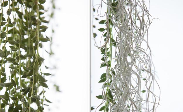 הביתה של אליס, צמחים  (1) (צילום: הגר דופלט)