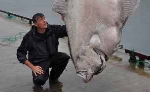 דג הליבוט (צילום: i.imgur.com)