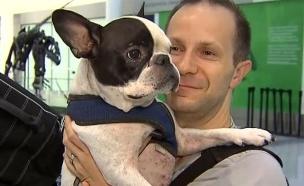 ההחלטה של הטייס הצילה את חיי הכלב (צילום: טוויטר)
