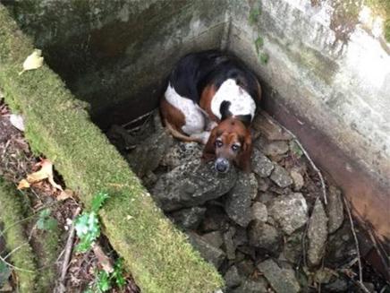 הכלבה פיבי חולצה מהבור במצב טוב