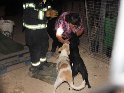 2 כלבים נשרפו למוות