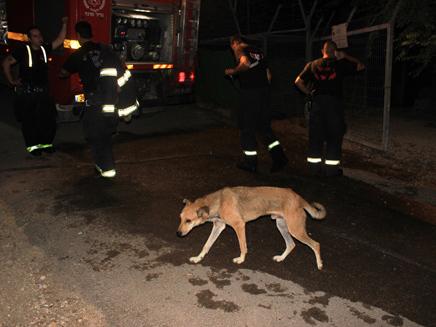השריפה בכלבייה בסכנין