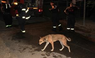 השריפה בכלבייה בסכנין (צילום: בשיר אמין)