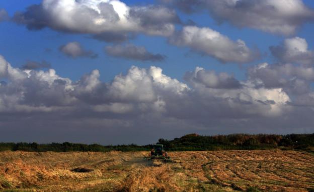 שדה חקלאי ליד הוד השרון (צילום: דיויד סילברמן, getty images)