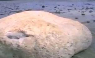 יצור צונאמי (צילום: יוטיוב)
