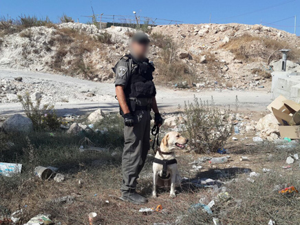 """הכלב """"תאז"""" (צילום: חטיבת דובר המשטרה)"""