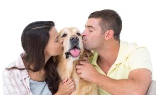 על כלבים וזוגיות (צילום: Wavebreakmedia, Thinkstock)