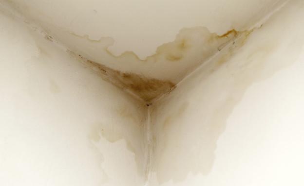 עובש ורטיבות (צילום: אימג'בנק / Thinkstock)