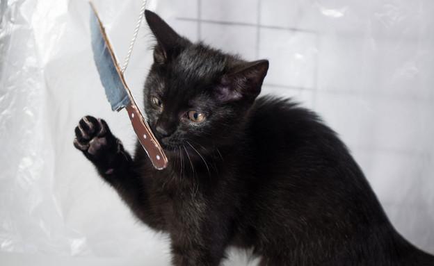חתול עם סכין (צילום: mashable, מעריב לנוער)