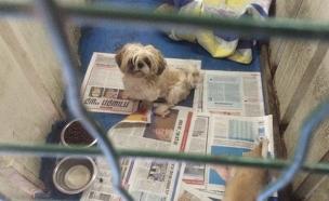"""כך הוחזקו הכלבים במחסן (צילום: ד""""ר נירית צפורי-ברקי, משרד החקלאות)"""